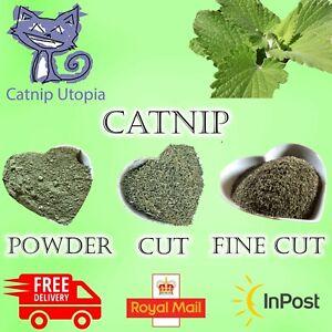 CATNIP - Premium Fresh Harvest From Our Farmer. Won't Buy More Potent!!