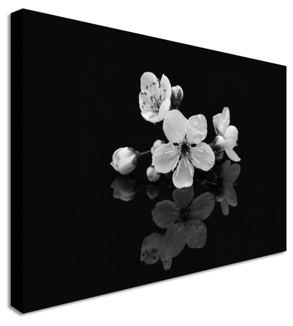Reflecting Orchids On Black Flowers Black and White Canvas Art Cheap Pictures