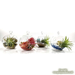 4 Air Plant Sphere Terrariums With Fire Air Water Earth Element