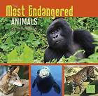 The Most Endangered Animals in the World by Tammy Gagne (Paperback, 2015)