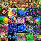 Hydrangea Orchid Ideal Garden Potted Seeds Rare Flower garden Plant Ornamental