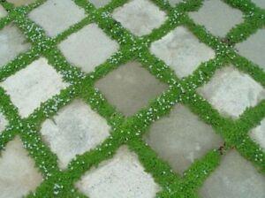 Tile-Paver-Concrete-Molds-12-x12-12pc-Set