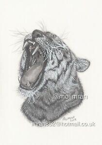 Dessin De Tigre Du Bengale Avec Bouche Ouverte Animal Faune Art