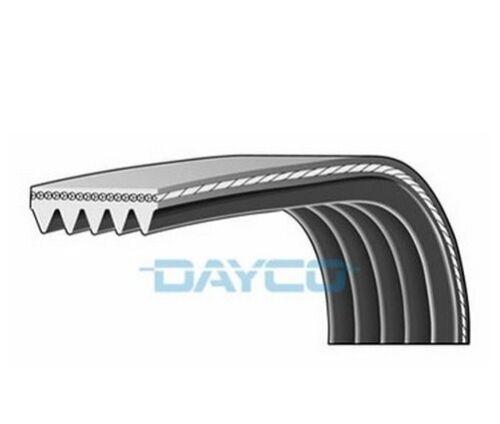 Dayco poly v-côtelé ceinture 5PK736 5 côtes auxiliaire 736mm ventilateur alternateur