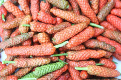 Top Délicat à épices pour les gastronomiques CUISINE de la longue poivre poivre graines.
