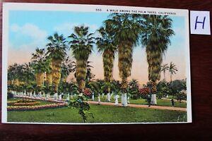 Carte Postale Vue Carte Amérique Du Nord Usa California Palm Trees-afficher Le Titre D'origine Lissage De La Circulation Et Des Douleurs D'ArrêT