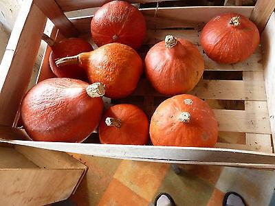 15 graines semences POTIMARRON ROUGE  Seeds produit en France bio potimaron