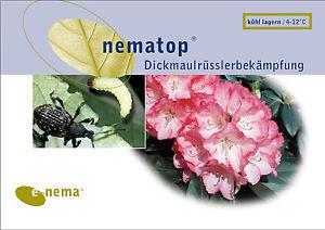 50-Mio-Nematoden-gegen-Dickmaulruesslerlarven-fuer-100m-Flaeche