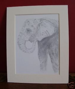 10-x-8-inch-mounted-print-of-Elephant-pencil-drawing