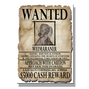 Details about WEIMARANER Wanted Poster FRIDGE MAGNET New DOG Funny