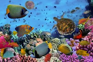A1-Tropical-Coral-Reef-Poster-Art-Print-60-x-90cm-180gsm-Ocean-Fish-Gift-8475