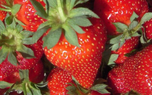 TEMPTATION STRAWBERRIES-DELICIOUS-RED 30 FINEST SEEDS-FRUIT GARDEN