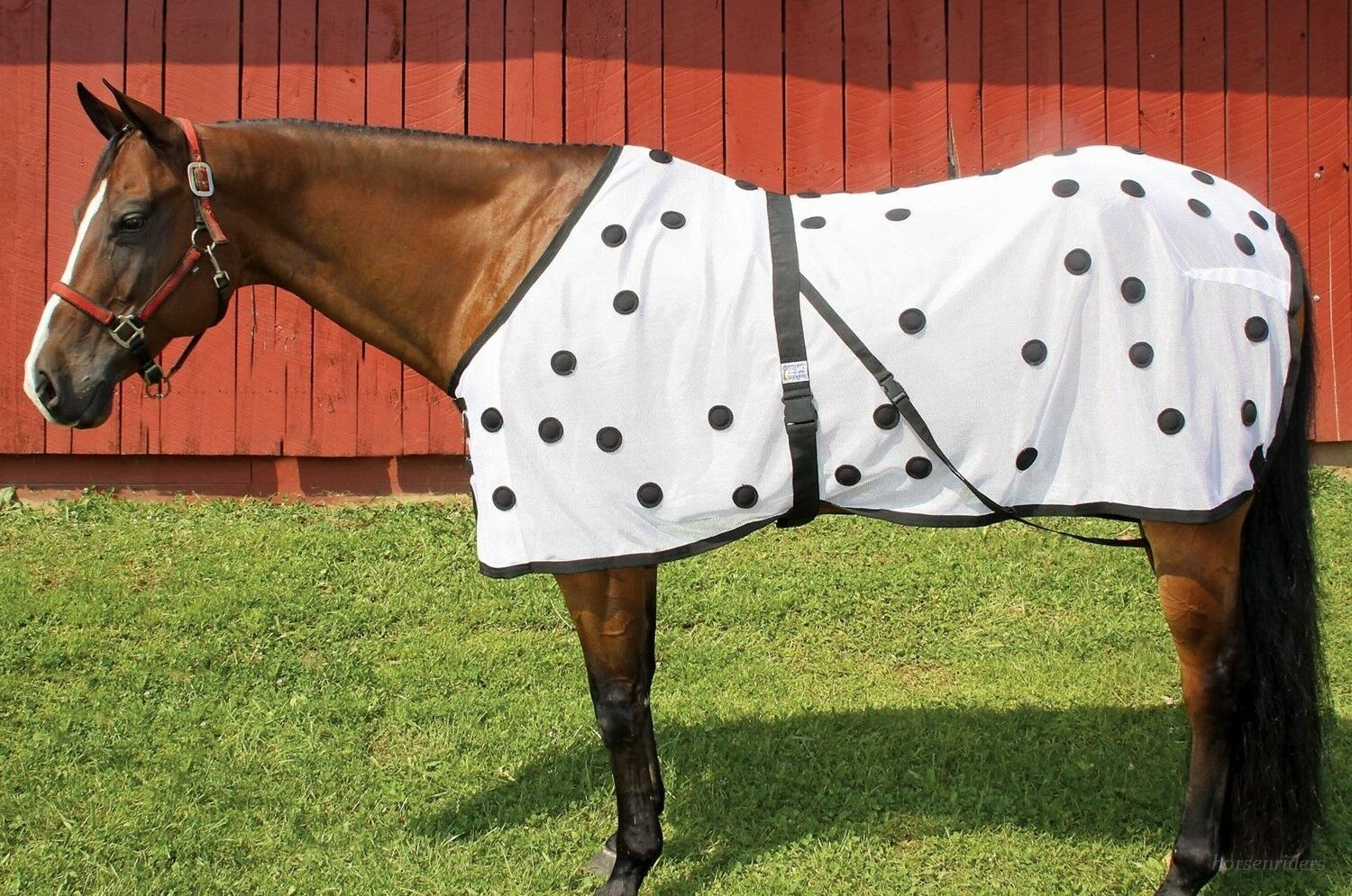 Magnetic Therapy Horse Blanket - Abetta-Connie Combs -84 Magnets - Large 80 -84