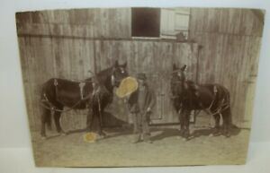 Antique-Cabinet-Card-Photo-Man-with-His-Prize-Horses
