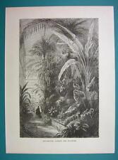 PARIS Botanical Garden Greenhouse Jardins - 1877 Wood Engraving Illustration