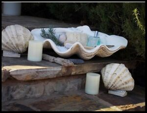 Enjoyable Details About Large Clam Shell Bowl Tabletop Decorative Storage Indoor Giant Seashell Planter Interior Design Ideas Apansoteloinfo