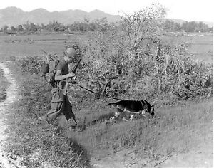 German Shepherd Dog Vietnam War Us Army Photo Reprint 7x5 Inch Ebay