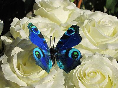 3D Schmetterlinge Magnet Wanddeko Wandtattoo viele Design zur Auswahl Teil 1