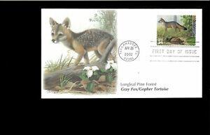 2002-FDC-Longleaf-Pine-Forest-3611g-Fox-Tortoise-Tallahassee-FL