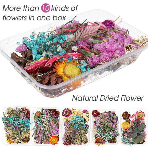Real Dried Flower Dry Plants Craft Aromatherapy Candle Epoxy Resin Pendant
