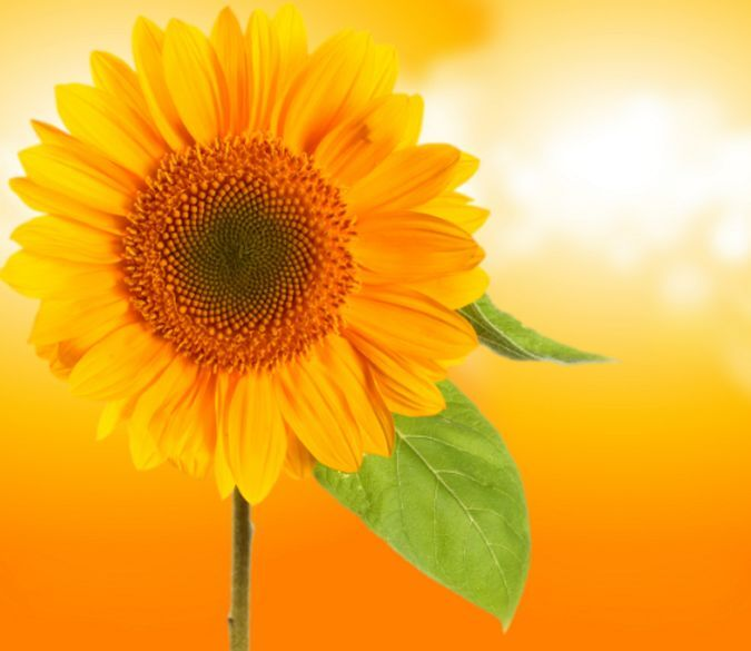 3D Sunflower Picture 3951 Paper Wall Print Decal Wall Wall Mural AJ WALLPAPER GB