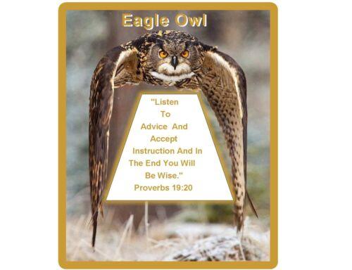 Locker  Magnet Cool Wise Eagle Owl In Flight  Refrigerator