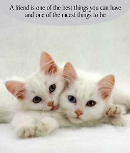 Image Is Loading Friendship Birthday Card Cat Lovers Greeting White