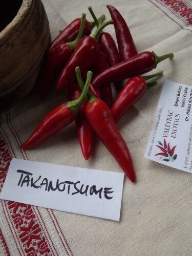 Takanotsume Hawk Claw Chili 10 seeds