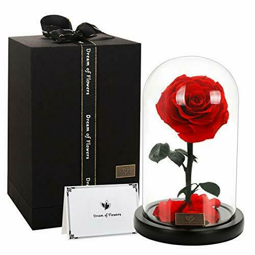 Glass Dome Perfect Unique Rose with Real Fallen Petals Beauty and Beast Rose
