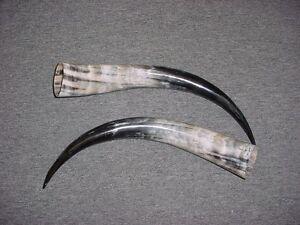 "16"" - 20"" Bull Horns Cow Horns STEER LONGHORN horns TAXIDERMY Pairs Polished"