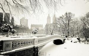 Stampa Su Tela Canvas New York Central Park Neve Bianco E Nero Citta