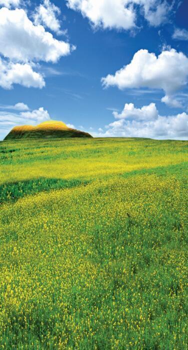 3D Vast verde grassland sky Wallpaper Decal Decor Home Kids Nursery Mural  Home