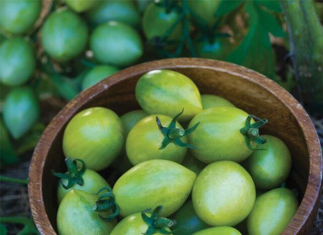 Vegetable - Tomato - Green Envy - 10 Seeds