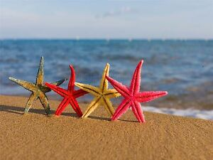 ART-PRINT-POSTER-PHOTO-STARFISH-STANDING-BEACH-OCEAN-LFMP0513