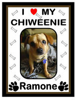 Personalized Chiweenie Photo Magnet