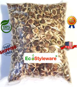 Details about 7 oz (APX 1000) moringa seeds Semillas de Moringa Oleifera-