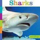 Sharks by Kate Riggs (Paperback / softback, 2014)