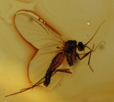 Large Genuine Untreated Baltic Amber Silver Gold Plated Pendant With Fossil Fly Inclusion