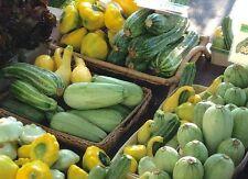 30 Summer Squash Mix  seeds *6 Varieties* Heirloom No GMO Zucchini Scallop Spagh
