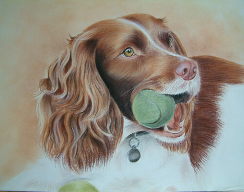 Dog Mounted Print 18 Images by UK artist SPRINGER SPANIEL