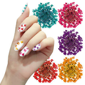 Detalles De Flores Secas 3d Decoracion Uñas Acrilicas Gel Acrygel Nail Art
