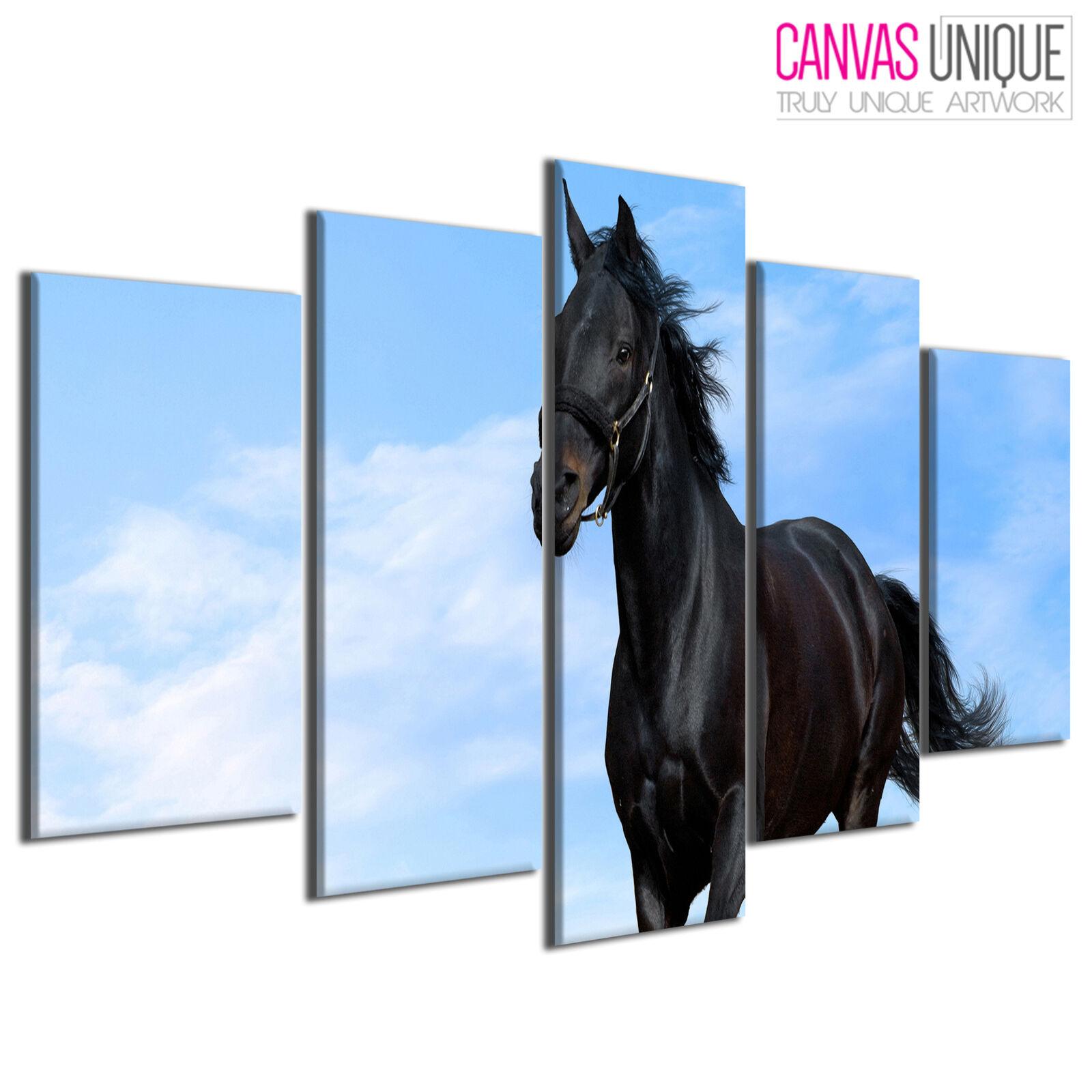 5PA271 Wild Stallion Gallop Blau Sky Animal Multi Frame Canvas Wall Art Print