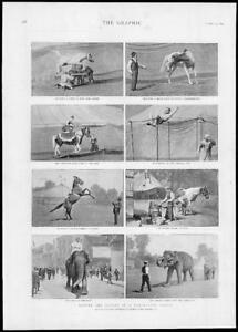1893-Antique-Print-ANIMALS-CIRCUS-Travelling-Horse-Tricks-Elephants-238