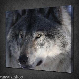 STUNNING-GREY-WOLF-ANIMAL-WALL-ART-PICTURE-CANVAS-PRINT-READY-TO-HANG