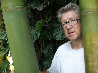 Frost Duro Inverno Bambù Gigante Cresce In Scimmie Ritmo-mostra Il Titolo Originale Texture Chiara
