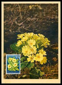 Bien Informé Yu Mk 1969 Flore Clé Fleur Maximum Carte Carte Maximum Card Mc Cm H0646-afficher Le Titre D'origine AgréAble à GoûTer