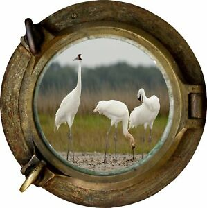 Huge-3D-Porthole-National-Wildlife-View-Wall-Stickers-Mural-Decal-Wallpaper-231