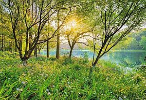 Image Is Loading SPRING LAKE Photo Wallpaper Wall Mural GREEN FOREST  Part 57