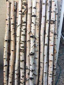 Decorative Birch Poles By Posh Logs Beautifull Ebay