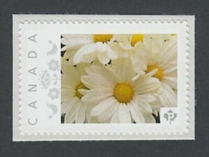 WHITE-DAISY-FLOWERS-Picture-Postage-stamp-MNH-Canada-2014-p8fL3-2